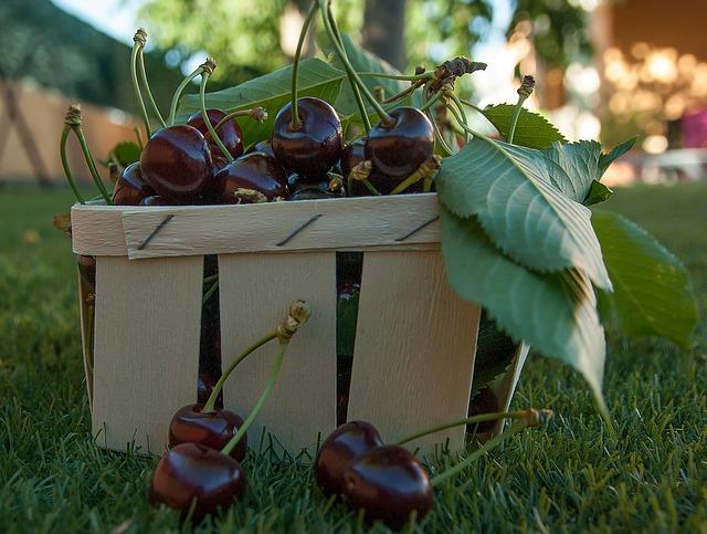 očesané ovoce